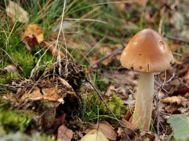 Eine Nahaufnahme des Waldbodens mit Laub, Moos und einem braunen Pilz.